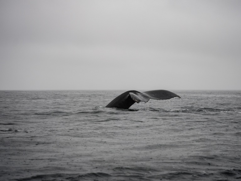 whales-2