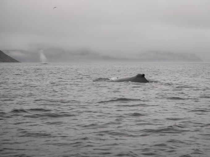 whales-5