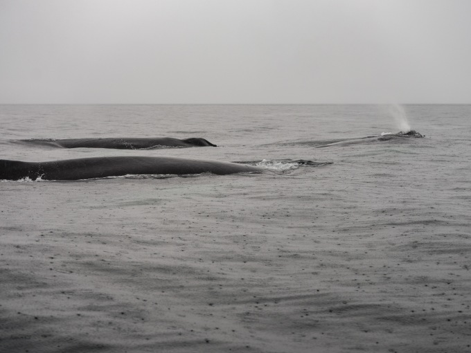 whales-7